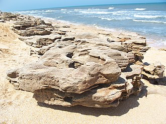 Coquina - Coquina outcropping on the beach at Washington Oaks State Gardens, Florida