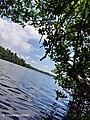 WaterSkyMangrove.jpg