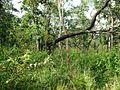 Wayanad Wildlife Sanctuary, Muthanga Range - panoramio (10).jpg