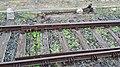 Weiche vor dem Eisenbahntor zum Vatikan.jpg