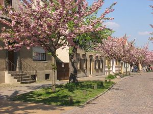 Werder (Havel) - Street in bloom on Werder's river island at the end of April, during the blossom festival