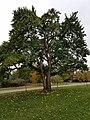Westover Park (31060342845).jpg