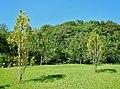 Wiese - panoramio (10).jpg
