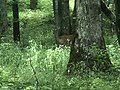 Wildlife in Cades Cove, Tennessee.jpg