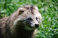 Wildpark Besuch, 2015 (19130331503).jpg