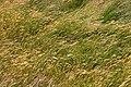 Wind in Grass (3184640607).jpg