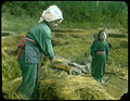 Woman separating rice from chaff with steel comb. (19942234912).jpg