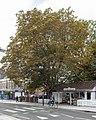 Wood St Horse Chestnut.jpg