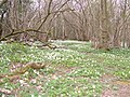 Woodland - geograph.org.uk - 331601.jpg