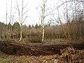 Woodland management, The Vyne Estate, Sherborne St John - geograph.org.uk - 147804.jpg