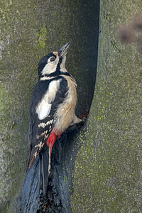 Woodpecker Lodz(Poland)(js)06.jpg