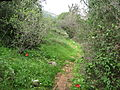 Yagur – Nesher, the Green Path – Mount Carmel 002.JPG