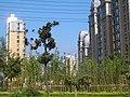 Yangzhou - Zhongxin Xi Lu - new apartments - CIMG2856.JPG