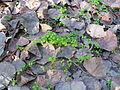 Yaprak ve ot.JPG