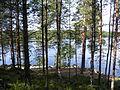 Ylinen Niemisjärvi metsää.JPG
