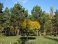 Yubileyniy Park.jpg
