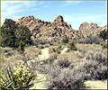 Yucca and Rocks, Joshua Tree NP 4-13-13a (8689099805).jpg