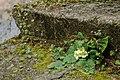 Zisterzienserstift Zwettl 7086.jpg