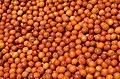 Ziziphus mauritiana (fruits).jpg