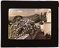 """El Fureidis,"" James Waldron Gillespie house, Parra Grande Lane, Montecito, California. Banksia roses (Rosa banksiae) along terrace LCCN2007684895.jpg"
