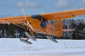 """""""Gadfly"""" in flight (5527167328).jpg"""