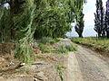Árboles caídos por temporal en el valle del Chubut.JPG