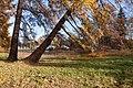 Верхний парк Ораниенбаума Пейзаж у Карлиного пруда.jpg