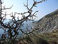 Деревцо) - panoramio.jpg