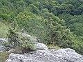 Дорога з Чуфут-Кале на Караїмське кладовище - panoramio.jpg
