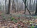 Еталонна діброва Вінницьке лісництво 7.jpg