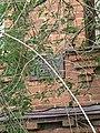 Здание доходного дома Н.А. Сыромятникова год постройки 1908 памятник архитектурыIMG 1952.jpg