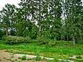 Олонецкий полуостров, где-то здесь была крепость.2.jpg