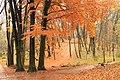 Осіння краса в Стрийському парку.jpg