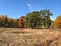 Пос. Дачный, октябрь 2014 - panoramio.jpg