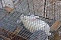 Пр.Советский, ярмарка, кролики, 25.11.2011 - panoramio (1).jpg