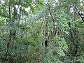 Сафари-парк Геленджика. Лес в верхнем парке - panoramio.jpg