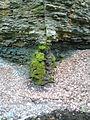 Скеля над Дністром.jpg
