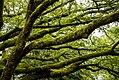 Сухуми Ботсад - panoramio (2).jpg