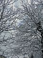 Троян - panoramio (9).jpg