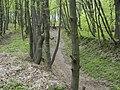 Украина, Киев - Голосеевский лес 14.jpg