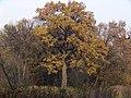 Украина, Киев - Голосеевский лес 141.jpg
