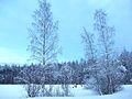 У озера зимой.JPG