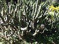 צמחיה- צבר ביער חזור.jpg