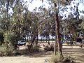 حديقة المداغ العامة.jpg