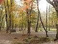 روز افتابی در پاییز.jpg