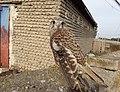وضعیت جانوری در ترکمن صحرا.jpg