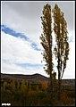 پائیز در حومه مراغه - panoramio (2).jpg
