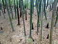 二龙山 - panoramio - 即墨·布衣 (1).jpg