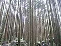 台灣的森林.jpg