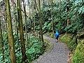 大學池步道 Daxuechi Trail - panoramio.jpg